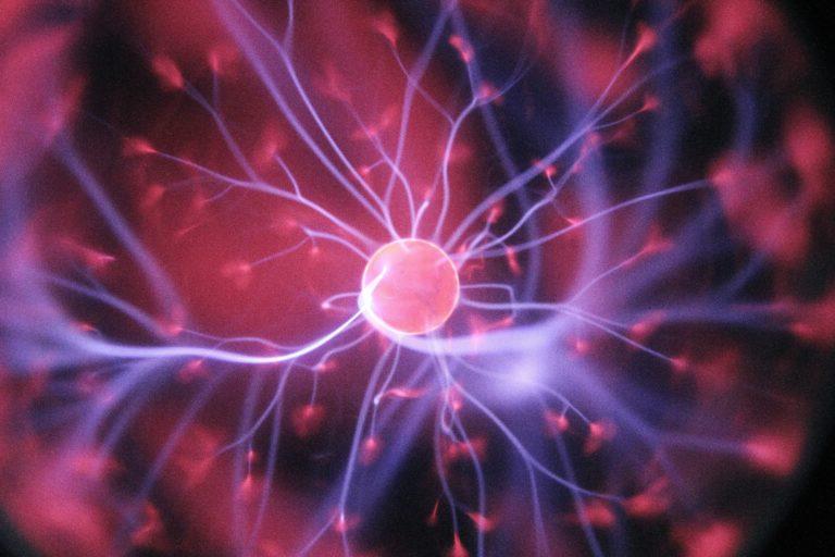 brain neural activity